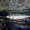 Законът за водите възпрепятства усвояването на средствата по рибарската програма. Големите ферми е възможно да фалират 14