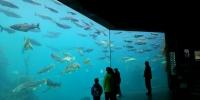 Отговор от Агенция митници относно питане на БГ ФИШ за вноса на риба
